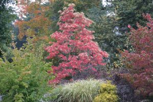 2014 Natural Autumn Color 4 by Miss-Tbones