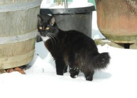 Artemis in snow day 2 6.0 by dottypurrs