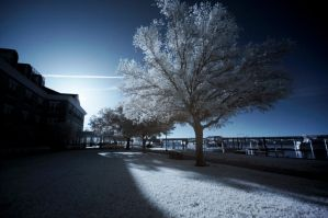 New Bern IR VIII by LDFranklin