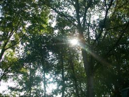Sunlight Through Trees by AetheriumDreams