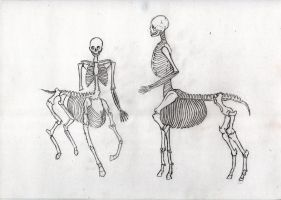 Centaur Skeleton by CarlottaCreed