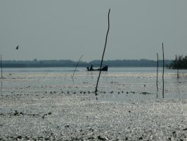 Somewhere in Danube Delta by lumixdmc850