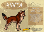 Shinta -- Official Reference Sheet by InsaneRoman