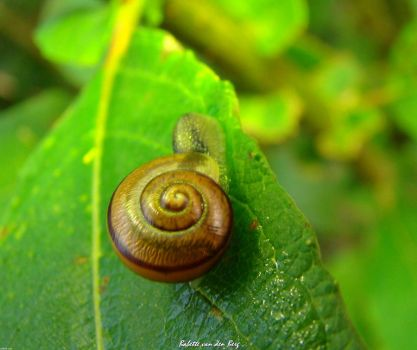 Snail on an adventure by babsartcreations