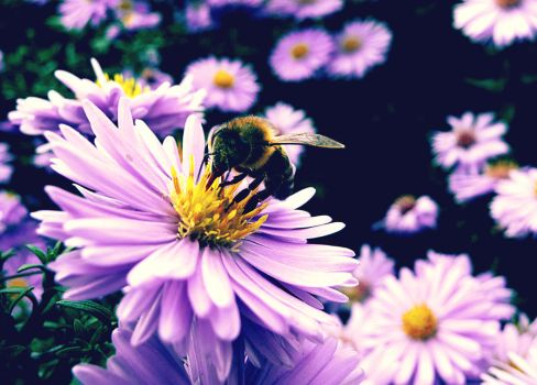 Bee by Madeleine1337