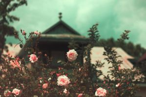 Banal roses by dammmmit