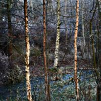 The cold forrest by Healzo