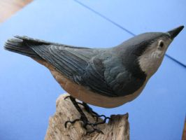White-Breasted Nuthatch 2 by Bagheera3