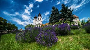 Lavenders and blue sky by rdevill