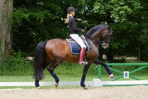 Lusitano Extended Trot by LuDa-Stock