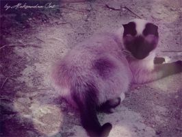 Ooh.. What is it... My tail??? by Aleksandra-Cat