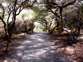New Zealand Path by Divulged