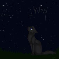 Cinderpelt - Why!? by Saphirfluegel97