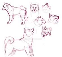 Shiba sketchies by bawky