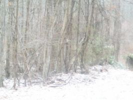 winter forest 3 by watergal28-stock