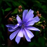 Blue for Lucila by vojis