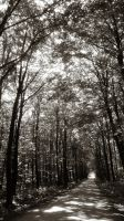 Forest BW by DesiraeR