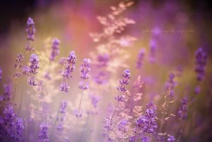 Lavender summer by Inside-my-ART
