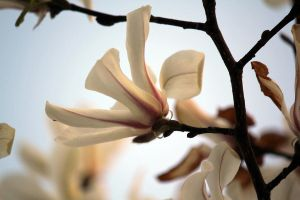 Spring Flowers by firenze-design
