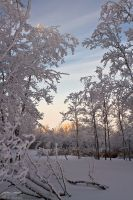 Frosty Days by ColeJA