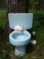 Beware of Albino toilet bunny3 by InKibus