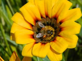 Bee 004 - Hb593200 by hb593200
