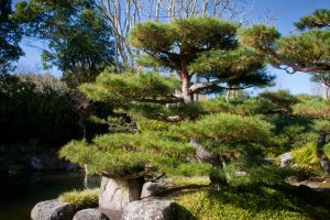 Bonsai full size by CathleenTarawhiti