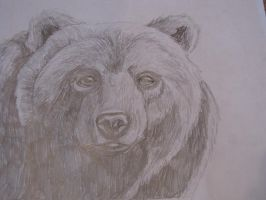 Brown Bear (Toklo) by xSilverSymphony