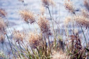 Fluffy Plant by VerinS