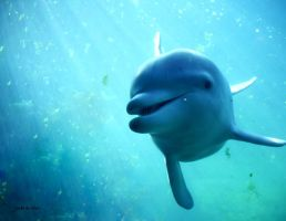 Dolphin by JTDOeNVK