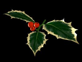 Holly Branch by Ayedail