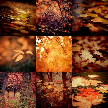 Autumn 2008 by Eredel