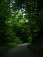 Places - Forest is breathing by Stock-gallery