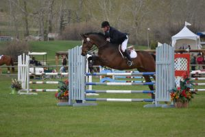 Show Jumping - 5 by Silver-Stock-Images