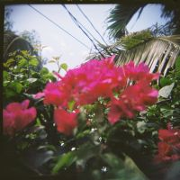 Grow Me Flowers by lomocotion