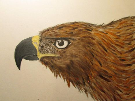 Golden Eagle Step 3 by akyta680