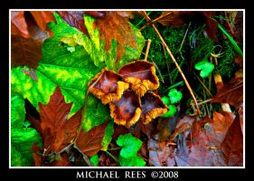 Fall ground foliage and fungus by Luv2suspendyou