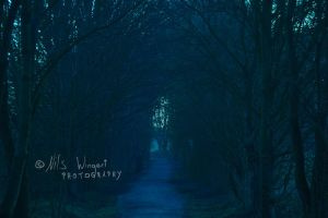 fantasy forest by Nils-Wingert