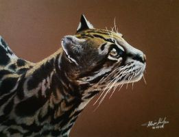 Colored Pencil Ocelot by whispwill