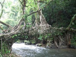 Living Root Bridge by sagnikarmakar