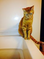Bath time is sad time for Monster. by KitCatTurner