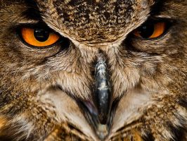 Eagle Owl - Jul 11 by mszafran