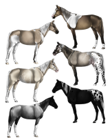Natural Horse Adopts 4 by Quickdopts