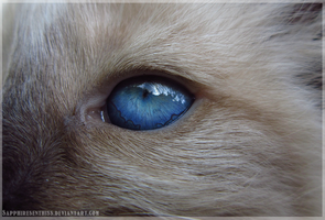 Behind Blue Eyes by Sapphiresenthiss