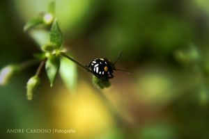 My Little Friend by Almirith7