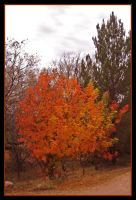 Treasured Tree in Tubac by TeaPhotography