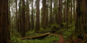 Redwood 7 2010-06-24 by eRality
