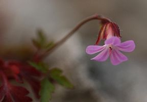 A small flower in the forest. by Sparvoga