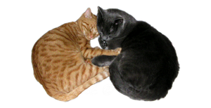 The story of two cats by Tsein