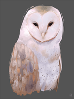 Owl by s3v4ns